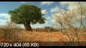 ����� - ����� ����� / Massai - Les guerriers de la pluie (DVDRip/1.33)