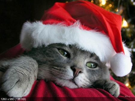"Обои ""Marrry Christmas"" 2012"