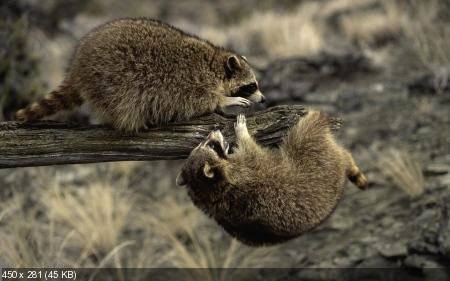 Обои в мире забавных животных часть #2