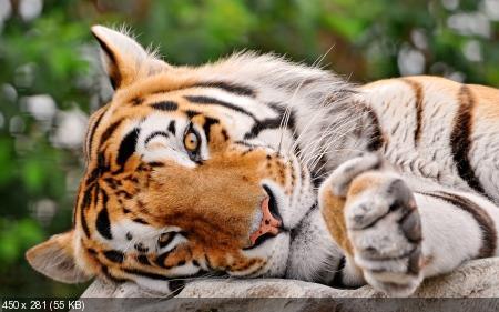 Обои в мире забавных животных часть #11
