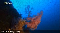 Шестижаберная акула.Погружение в бездну / Sixgill Shark.Into The Abyss (2010) HDTV 1080i