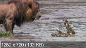 Африканские кошки: Королевство смелости / DisneyNature: African Cats (2011) BDRip 720p