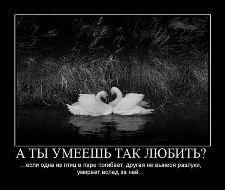 Свежая подборка демотиваторов от 04.01.2012
