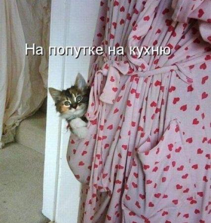 Свежие котоматрицы  от 10.02.2012
