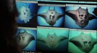 ВВС: Мир природы. Королева морских дьяволов / The Natural World. Queen of the Manta Rays (2009) Отличное качество