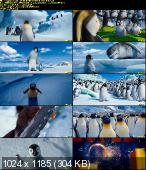 Happy Feet: Tupot małych stóp 2 / Happy Feet 2 (2011) PLDUB.MD.DVDSCR.XviD-BiDA