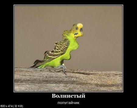 Свежая подборка демотиваторов от 10.02.2012