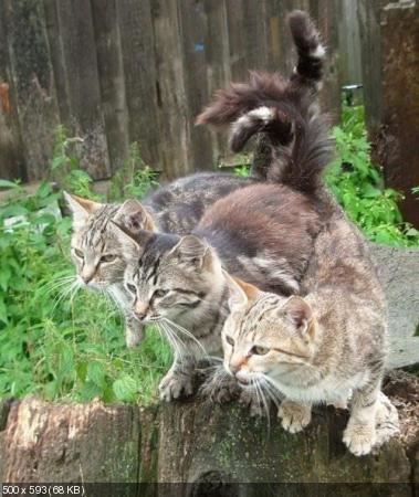 Улетные фото приколы про кошек (2012)
