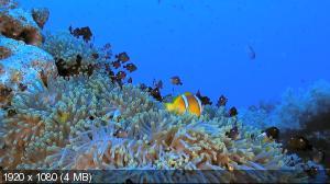 ���������� ��� 3D / Faszination Korallenriff 3D (2011) BluRay + BDRip 720p + HDRip