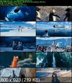 Happy Feet: Tupot małych stóp 2 / Happy Feet 2 (2011) PL.DUBB.DVDRip.XviD-Zet