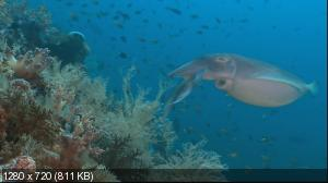 ����� ����: ����������� ��������� / Wild Asia: Kingdoms of the Coast (1998) BD Remux + BDRip 1080p + 720p